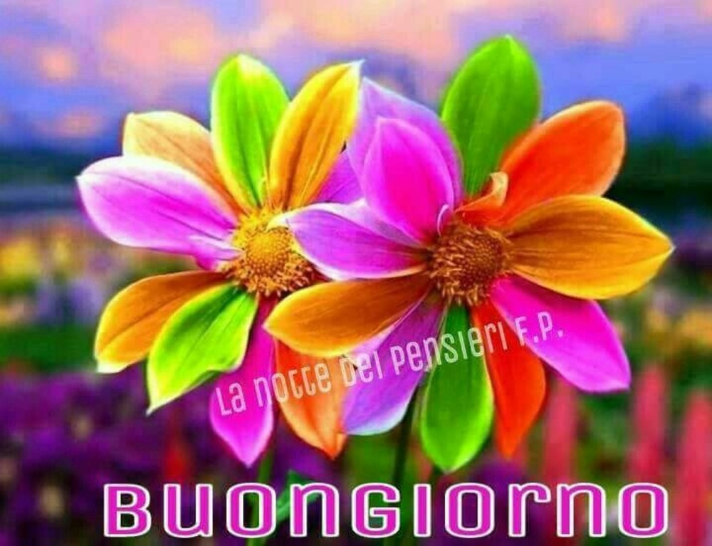 Bellissime immagini per buongiorno 2 for Immagini buongiorno bellissime
