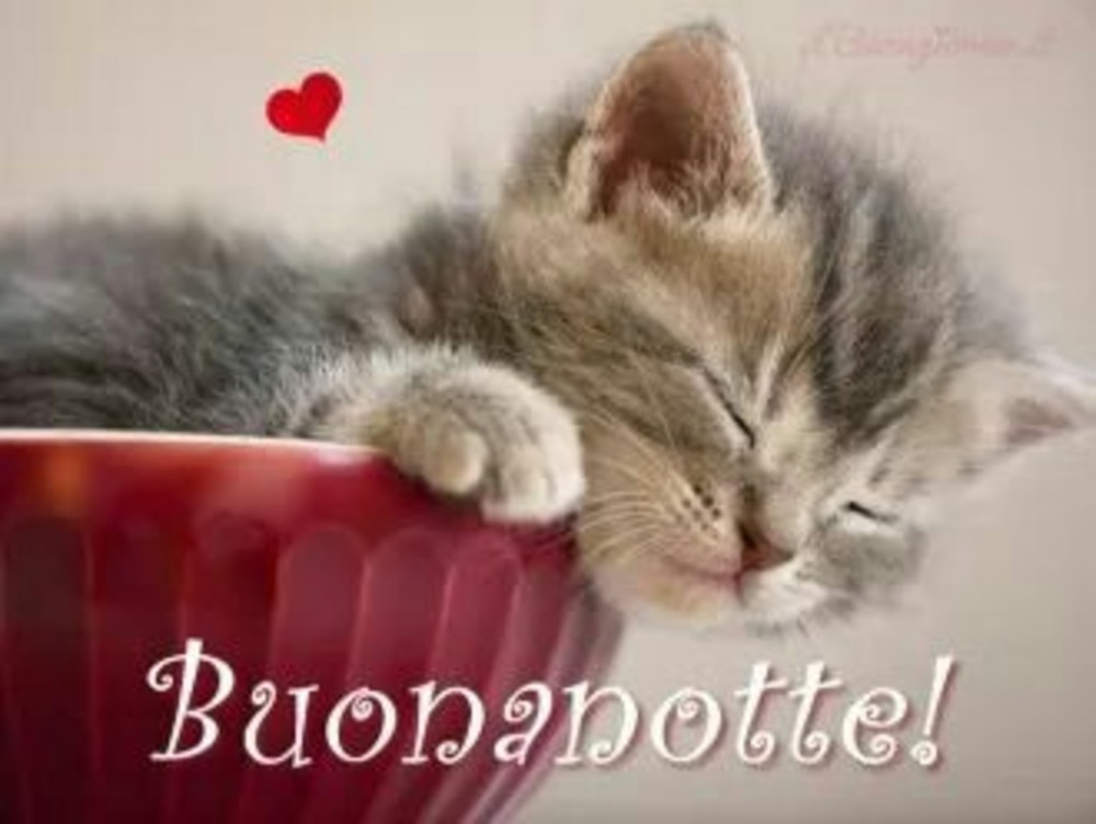 Immagini serena notte con gatti gattini for Buongiorno con gattini