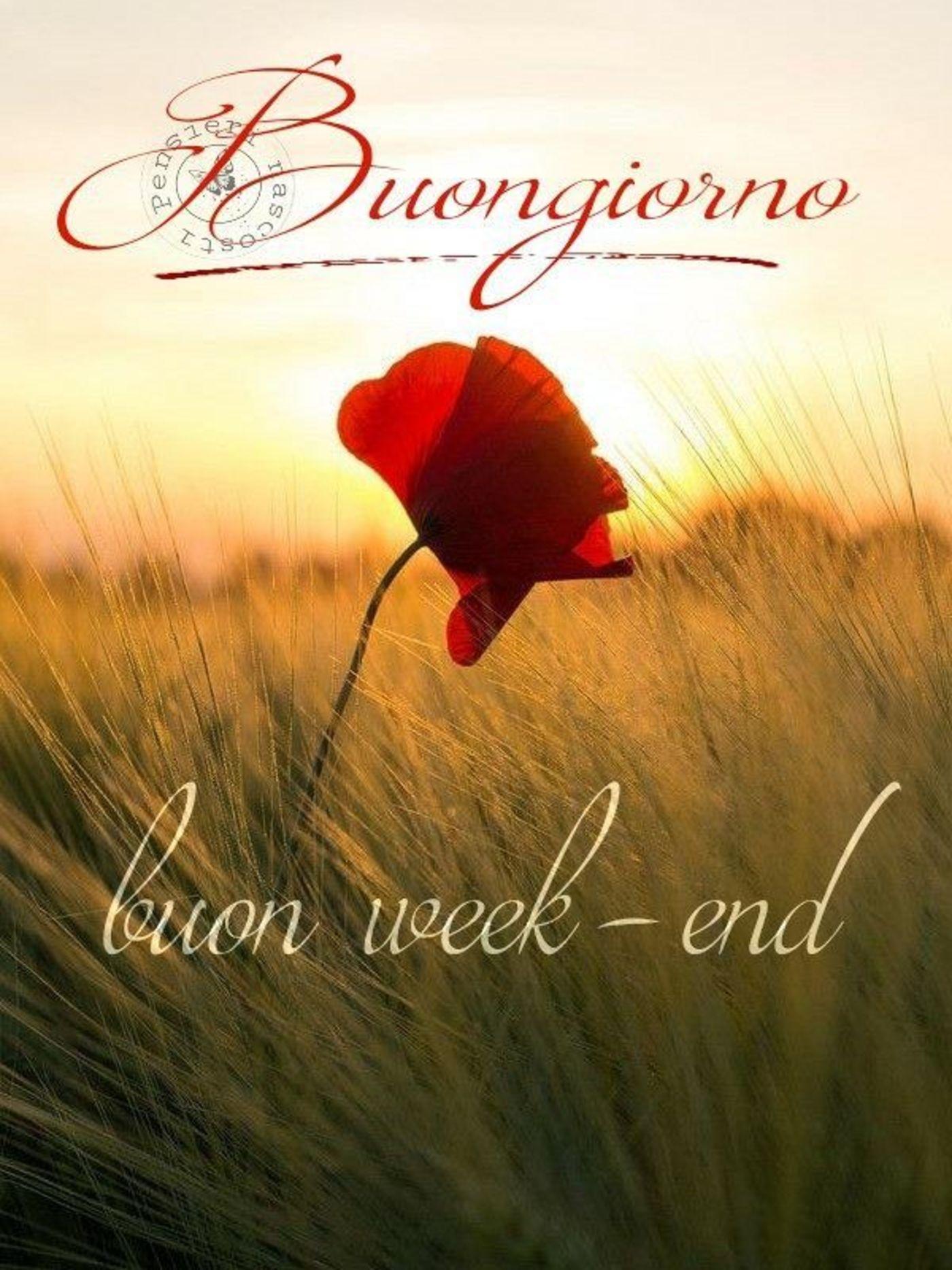 Buongiorno e Buon Weekend 3137