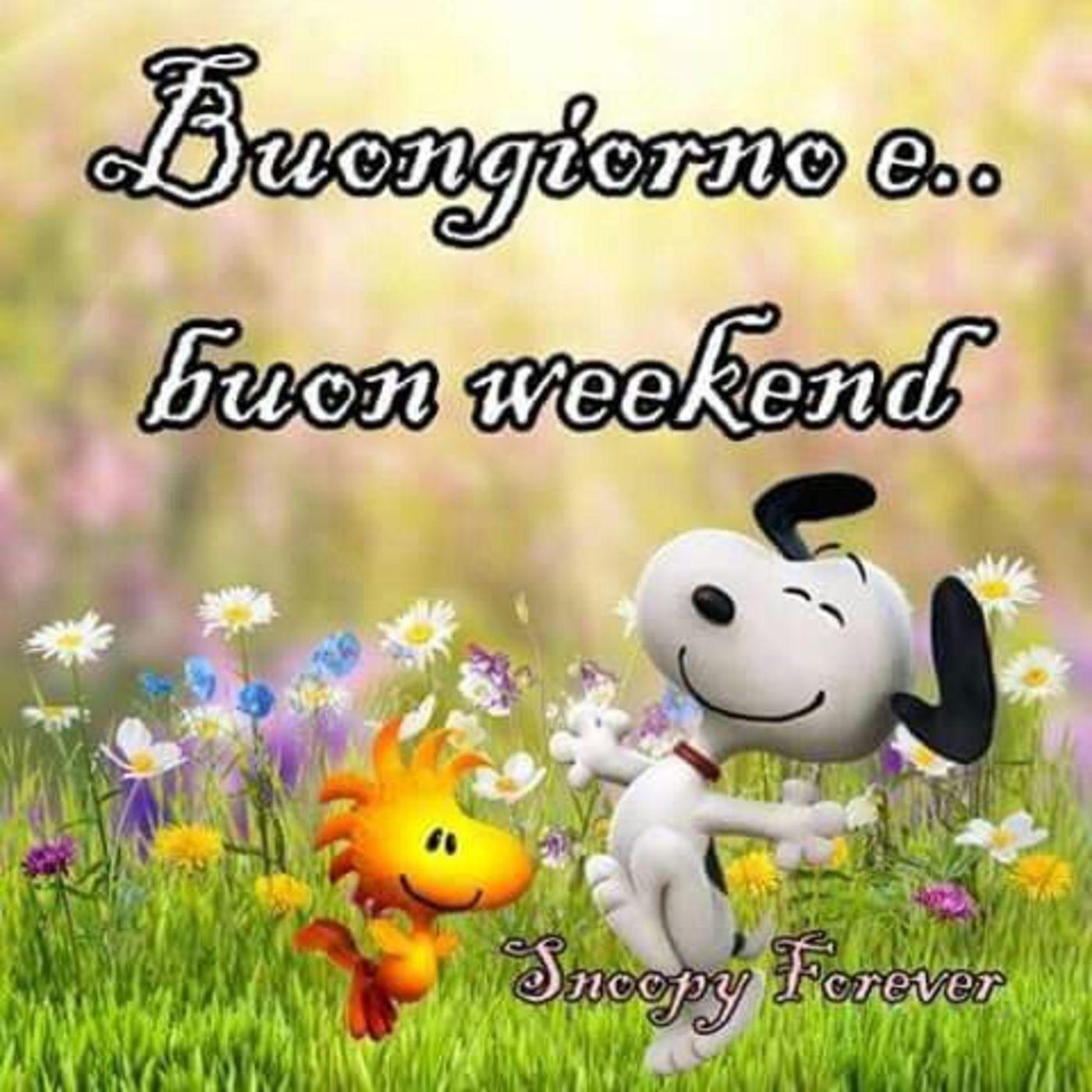 Buon fine settimana archives pagina 3 di 31 for Buon weekend immagini simpatiche