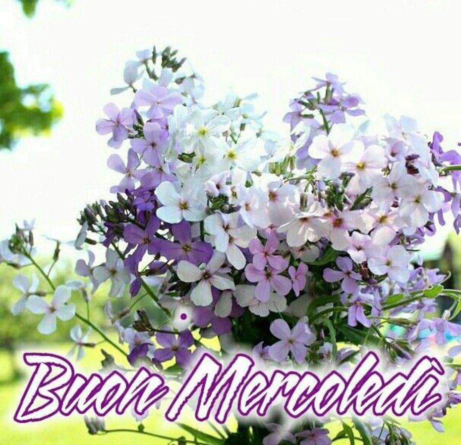 Buongiorno Buon Mercoledì bellissime immagini 8415