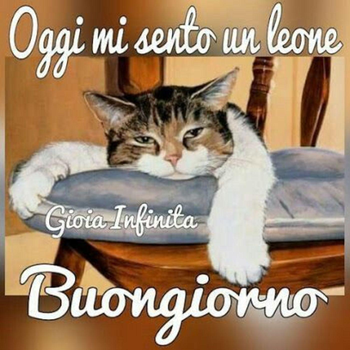 Immagini buongiorno coi gatti for Buongiorno con gattini