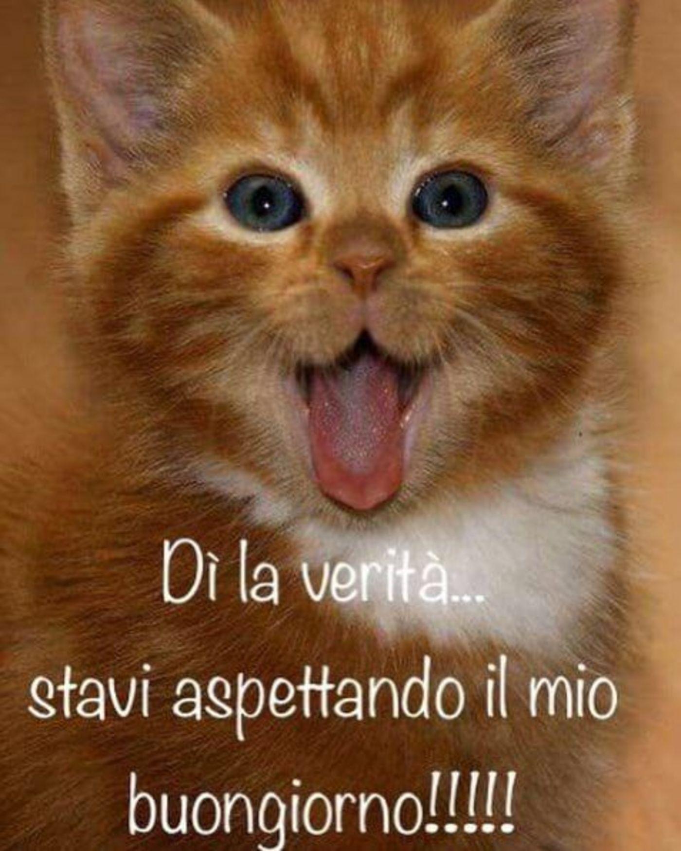 Immagini per buongiorno con gli animali 6 archives for Immagini buona giornata divertenti
