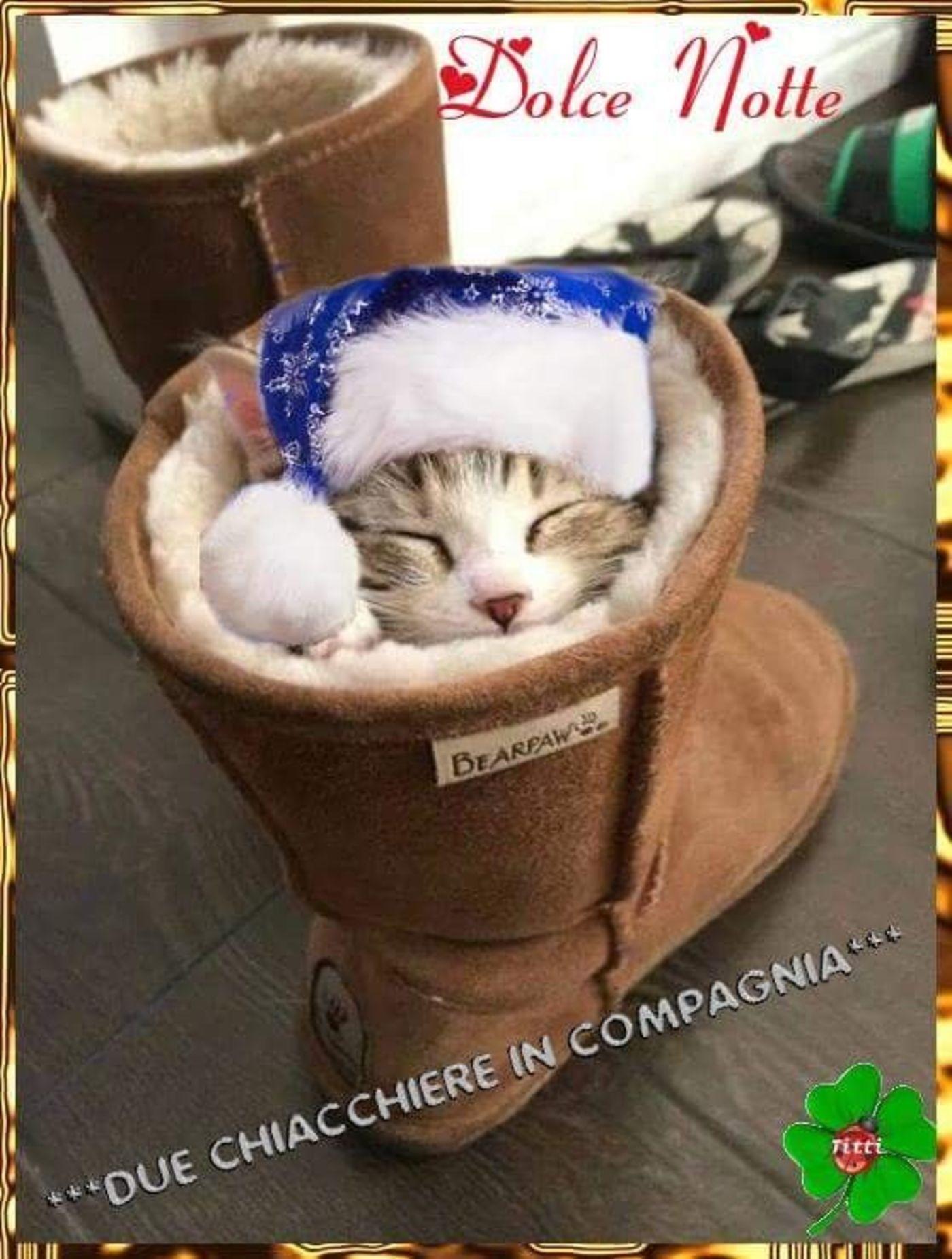 Buonanotte Coi Gatti 5 Buongiornissimocaffe It