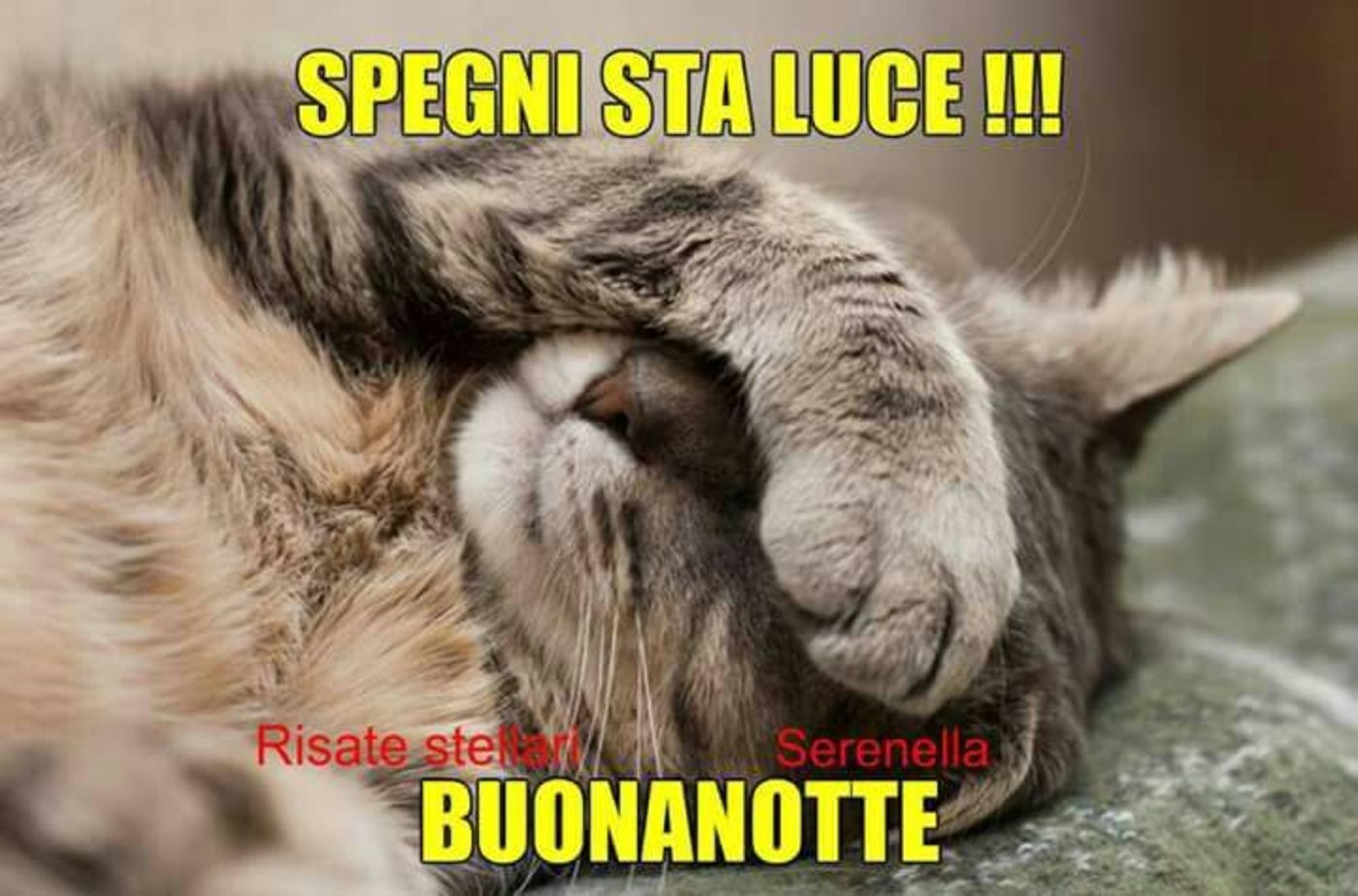 Buonanotte Coi Gatti 7 Buongiornissimocaffe It