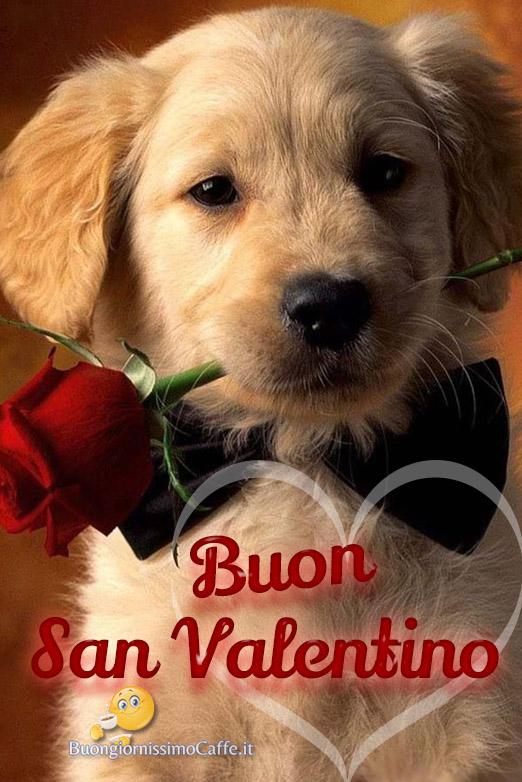 Buon San Valentino immagini tenere